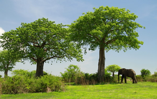 Fotogalerie Tanzánie