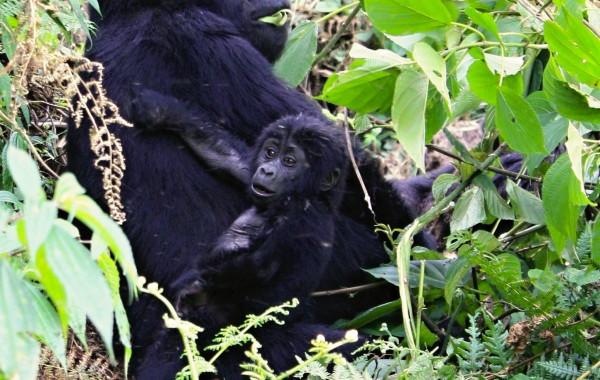 Fotogalerie Uganda